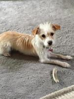 """Young Female Dog - Terrier: """"Charly"""""""