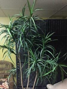 ***** Tropical Accent Plant *****