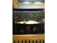 JUWEL 450 BOW FRONT FISH TANK