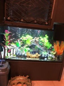 35 Gallon Fish tank w/ 2 Filters, Heater, and Light