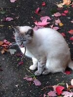 A white cat has been seen wandering near Bluebell Subdivision