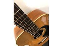 FARIDA G-10E. Electro/Acoustic