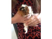 Hannah's Small Pet Care and Feeding. Covering Wimbledon, Kingston to Sutton and surrounds from £8.