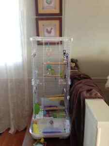 Budgie and Cage both only 6 month old