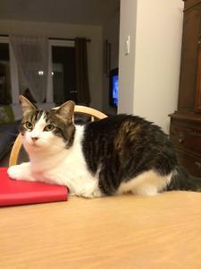 Still Missing: LOST CAT - SOUTHKEYS AREA