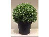 Display topiary bush