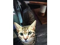 Lost Cat - Fordingbridge