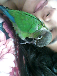 Birds parrot pet rabbit sitter from home $10/day avaiable 24/7