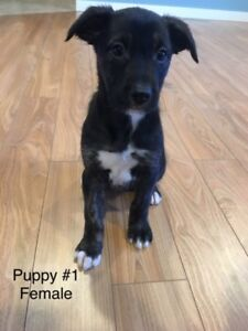 Puppies for Adoption, Available now