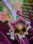 Eccentric-Wallflower