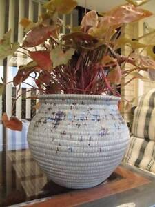 Syngonium in Ceramic Pot Thornlie Gosnells Area Preview