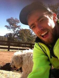 Brodie's Dog Walking Lyons Woden Valley Preview