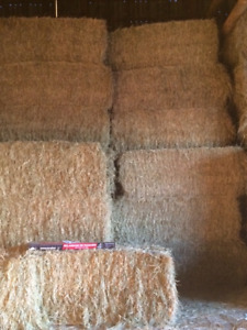 Premium large square bales of hay for sale.
