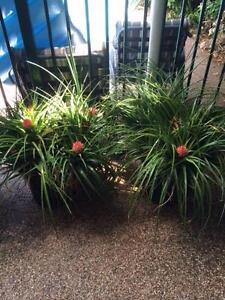 PLANTS, ORCHIDS, BROMELIADS & COLLECTIBLES Beverley Park Kogarah Area Preview