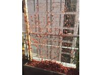 Boston Ivy in wooden trough for screening