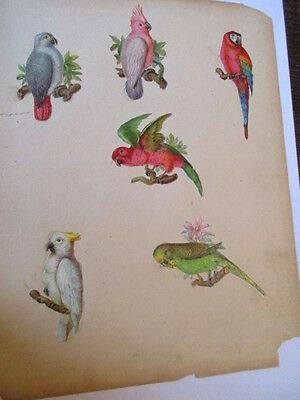 6 schöne alte Präge Oblaten Glanzbild Papagei um 1900