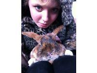 Rabbit for free!