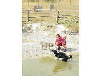 Stratford-upon-Avon dog walker and petsitter. Reliable, qualified behaviour trainer