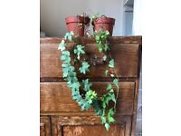 Two small indoor potted plants