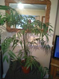 ARTIFICIAL FAKE PARADISE PALM TREE
