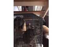 Chinchilla babies for sale