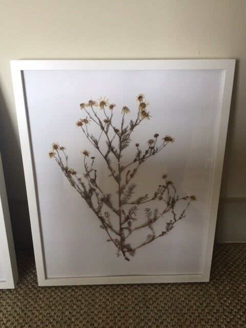 Pressed Flowers In Ikea Picture Frames In Tooting London Gumtree