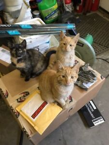 6 month old kittens to give away