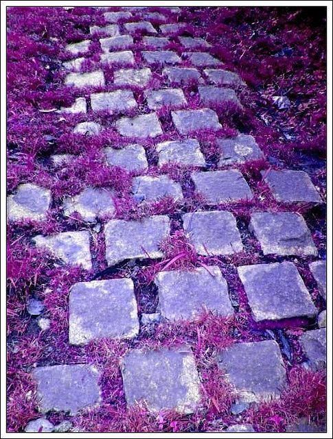 The Purple Brick Road