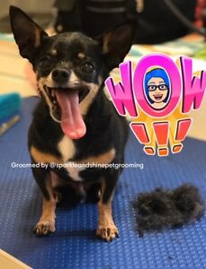 Personalized Dog Grooming (Big and Small)