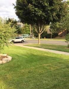 Spacious room on main floor - $625 only! (close to YU & Finch)