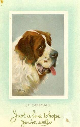 Old Embossed Dog Postcard Saint Bernard Portrait c1910 Blank Back Germany