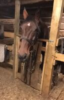 Horse equipment for sale
