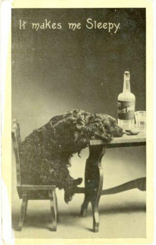 Old Rare Dog Postcard Irish Setter Port WIne It Makes Me Sleepy USA c1910 <VBG>