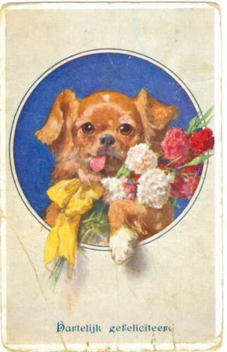 Old RARE Tibetan Spaniel Dog & Carnations Congrats Postcard Netherlands c1908