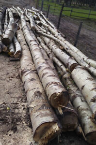 Need firewood or wood for milling?