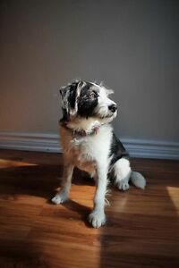 3.5 year old Jack Russel/Border Collie cross