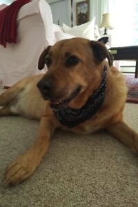 Wanted: Dog walker for a sweet, old boy - Month of July