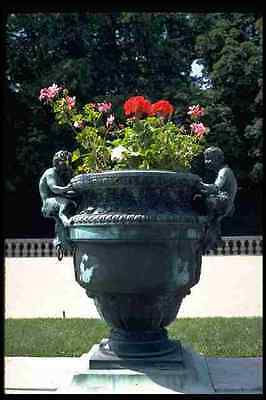 Versailles Urn (346052 Urn With Fauns And Begonias Versailles France A4 Photo Print)