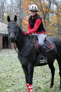 MUST GO - 16.1 hh 2007 Yellow Creek Mare. Passported.