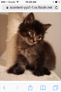 Two Kittens Available