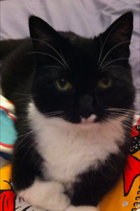 Reward for missing cat in Herring Cove ( Chambers Hill ) Area