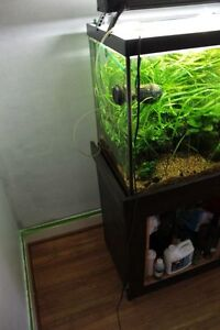 90 Gallon Aquarium with Stand and 2 Eheim Filters and T5HO light