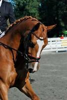 Horse lease and lessons available in Penticton