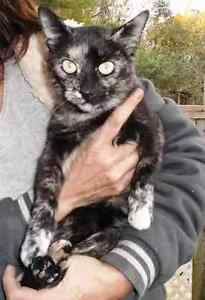 KLAWS: Found- now in KLAWS foster care, friendly young torti