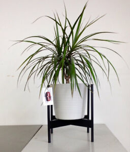 Case Study style Mid Century Modern Planter stand