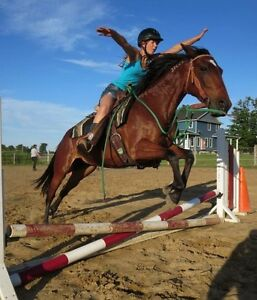 10 year old Well-Trained Mare London Ontario image 2