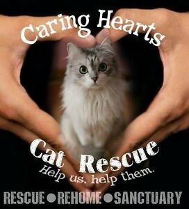 Yard Sale in support of Caring Heart Cat Sanctuary