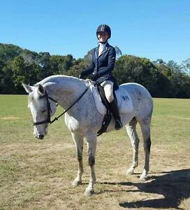 **THE ULTIMATE ALLROUNDER*** Fitzgibbon Brisbane North East Preview