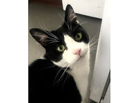 Hansome Cat Free to a loving home