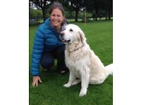Reliable Dog Walking and Pet Sitting Services